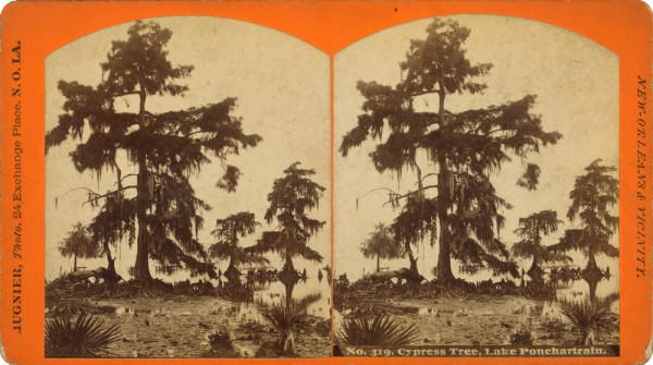 Cypress_tree,_Lake_Ponchartrain,_by_George_F_a